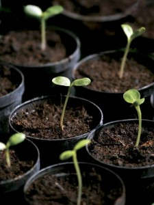 seedlings-1